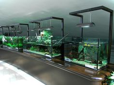 Cool 44 Relaxing Aquascaping Ideas for Inspiration https://roomaniac.com/44-relaxing-aquascaping-ideas-inspiration/ #AquariumTips