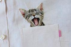 Será que algumas das camisas podem ter gatos?