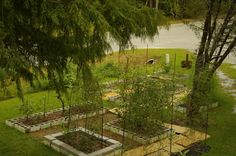My front yard garden. Grow food not lawns. ;-)