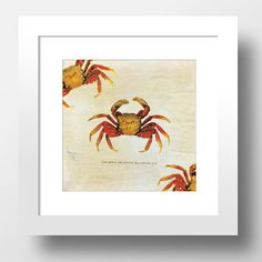 "Crab Beach Print 24x24"" Vintage Art Print Vintage Nautical Decor Ocean Wall Art - Giclee Print #beachdecor #beachprint #nauticalprint #nauticaldecor #homedecor #vintage #vintageprint #crabprint #crab #nautical #homedecorideas #wallprint #wallart #illustration #beach"