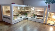 Very cool vivarium