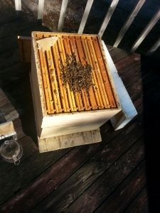 BEES--Winter Survival--A time tested plan and everyone working together. Can we learn something from the bees?