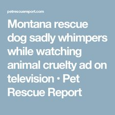 Montana rescue dog sadly whimpers while watching animal cruelty ad on television • Pet Rescue Report