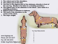 Carts for disabled pets. $70 dogstogo.net Diy Dog Wheelchair, Paralyzed Dog, Airline Pet Carrier, Dachshund Art, Pet Carriers, Dog Crate, New Puppy, Dog Harness, Little Dogs