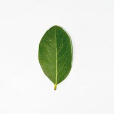 Green leaf  by AlexZaitsev on Creative Market