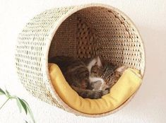Great Idea for a Tiny House with Cat/Pet Owners.... And you could use multiple ones up on the wall for storage!!!!!!
