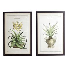 Aloe Prints - Set of 2 - Yellow