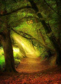 L'image du jour : La forêt St. Catherine en Angleterre