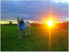 sunny horse