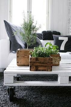 My Attic: Indoor Gardening