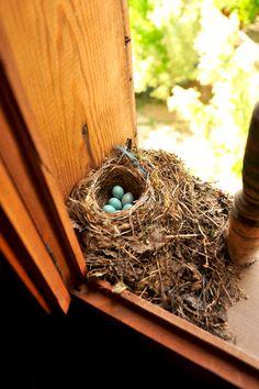 Kuş yuvası (bird slot) Yörük village, Safranbolu, Türkiye.