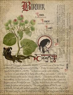 green witchcraft Herbal Grimoire BOS Sheets vol If you want to save ink, please contact me after purchase. I have files without a antique background as well. Magic Herbs, Herbal Magic, Grimoire Book, Witch Herbs, Green Witchcraft, Modern Witch, Practical Magic, Witch Aesthetic, Healing Herbs