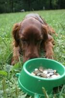 4 Ways Owning A Dog Saves You Money