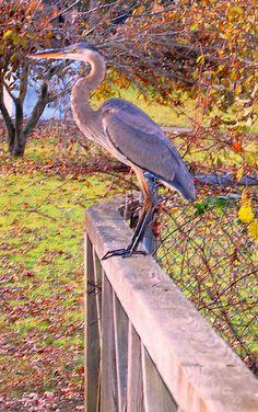 Burnham Park, Morristown, NJ.