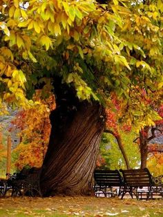 Beautiful fall tree in the park.