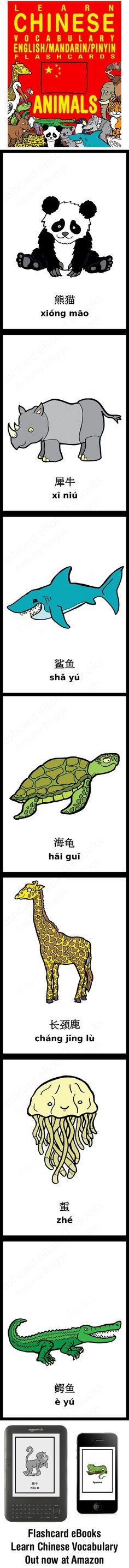 Animals | 中文