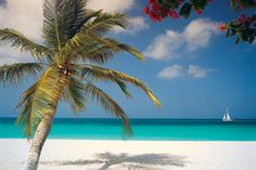 Aruba Island is one of the Caribbean Islands, and it neighbors Venezuela to the north. Aruba Island ...