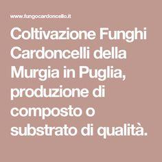 Coltivazione Funghi Cardoncelli della Murgia in Puglia, produzione di composto o substrato di qualità.