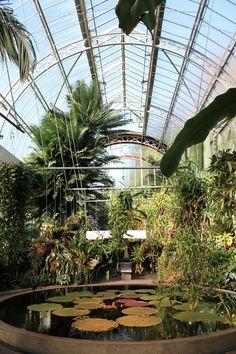 auckland winter gardens - Google Search Winter Garden, Auckland, Star Wars, Gardens, Google Search, Plants, Outdoor Gardens, Plant, Starwars