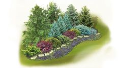 Evergreen Screen Landscape Plan: Gain privacy without sacrificing beauty. This evergreen screen will provide year-round seclusion, a home for wildlife, and a feast for the eyes.