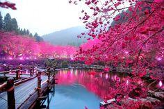 Cherry Blossom Lake, Sakura, Japan. NatGeo shared by @Reg Saddler #japan #photography