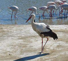 Pont De Gau Ornithological Park Bird Species Camargue Draw On Photos