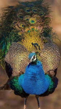 Desi μεγάλο πουλί πορνό XX μουνί