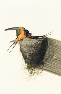 John James Audubon, Barn Swallow (Hirundo rustica), Study for Havell pl. 173, 1832. Watercolor, pastel, graphite, black ink, and gouache with scratching out, scraping, and selective glazing on paper, laid on card; 21 1/16 x 13 3/4 in. (53.5 x 34.9 cm) New-York Historical Society, Purchased for the Society by public subscription from Mrs. John J. Audubon, 1863.17.173