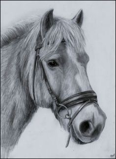 Haflinger Art Drawings Beautiful, Amazing Drawings, Horse Drawings, Animal Drawings, Portrait Sketches, Drawing Sketches, Abstract Pencil Drawings, Horse Sketch, Animal Sketches
