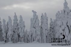 Winter in the municipality of Enontekiö, Finnish Lapland. Photo by Johanna Karppinen/ Film Lapland. #filmlapland #arcticshooting #finlandlapland