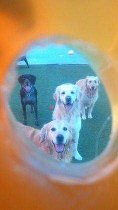 Mi perro tiene un Blog ! : Vacaciones y mascotas
