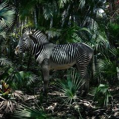 """30.7k Likes, 95 Comments - The New Yorker (@newyorkermag) on Instagram: """"The photographer Simen Johan gained notoriety in the 1990s for his creepy images of…"""""""