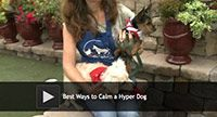 Best Ways to Calm a Hyper Dog