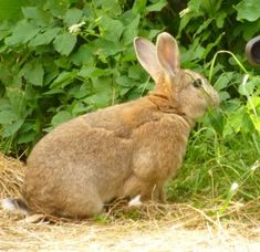 How can you make sure your rabbit's weight is healthy?  How important are commercial foods and how healthy are those commercially produced 'healthy' treats?  Find out more on our website Rabbit Diet, Pet Rabbit, Health And Wellbeing, Healthy Treats, Commercial, Foods, Website, Pets, Food Food