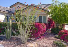 southwest desert landscaping ideas front yard | Desert Landscaping Plants 11. plant perennials