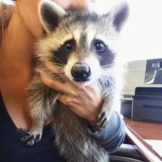 "This is Marley. According to his parents, he was ""found in an old tire after a crate of tires had been brought back to be recycled."" 