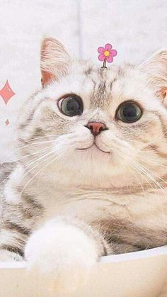 So many cute kittens videos compilation 2019 I Love Cats, Crazy Cats, Cool Cats, Cute Baby Animals, Animals And Pets, Funny Animals, Funny Cats, Cute Kittens, Pastell Wallpaper