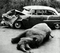 The same amount of damage happened to my car when I hit a deer and that's a RHINO. They're making everything cheaper..