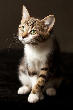 """catsbeaversandducks:  ""Mommy, is there tuna in heaven?"" Photo by ©John McGibbon  """