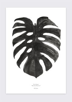 Monstera Deliciosaillustrated by Garmi. The first poster in our Plant Series. The Plant Series is a ongoing poster series ofvarious plants, leafs and flora.Pr