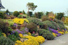 Talus en rocaille végétalisé de vivaces et arbustes par Maillard Paysage