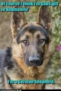Yes, I know I am God's gift to dogmanity....after all I am a German Shepherd.