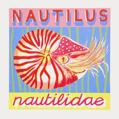 N is for Nautilus who in his shell is quite shy.