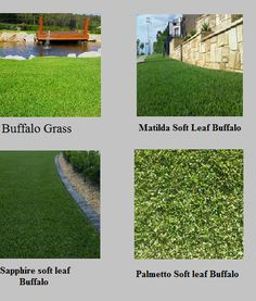 Buffalo turf grass is a great choice as it helps out compete weeds, requires less mowing, and best of all it works in full sun up to 70% shade, which is 3 to 4 hours of sun per day on average.