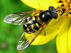 20 Insectos realmente increibles que imitan el aspecto de otros animales