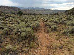 Going south, back to the parking lot on La Vista Verde Trail. Photo by Beth Dobos.