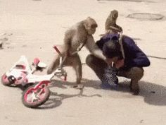 Grand Theft Auto: Monkey Edition