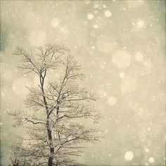 Winter Art: First Snow 8x8 Fine Art Photography, Snow Bokeh Tree Wall Art Nature Wall Art. $25.00, via Etsy.