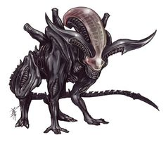 "This is a tumble-log devoted to the ""Alien"" and ""Predator"" film franchises, especially designs by HR Giger (and direction from directors Ridley Scott, James Cameron, et al). Alien Vs Predator, Predator Alien, Wolf Predator, Alien Creatures, Fantasy Creatures, Xenomorph Types, Giger Alien, Alien Queen, Alien Concept Art"