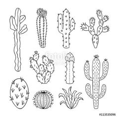 Cactus Succulents plants doodle perfect for bullet journal or planner decorations. #bujo #ihavethisthingwithbujo